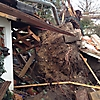 Sturmschäden - Beseitigung